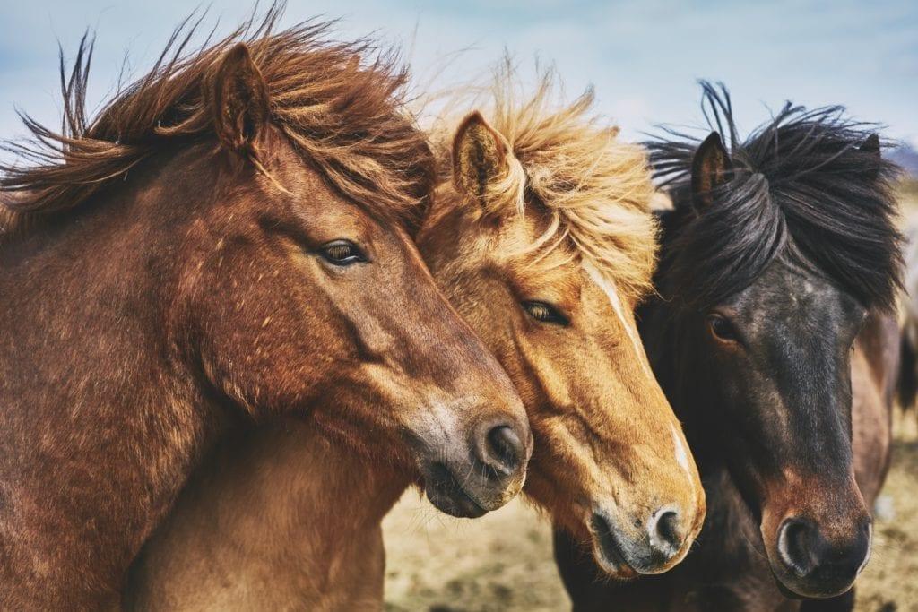 Gingermood - Blog - coachen met paarden