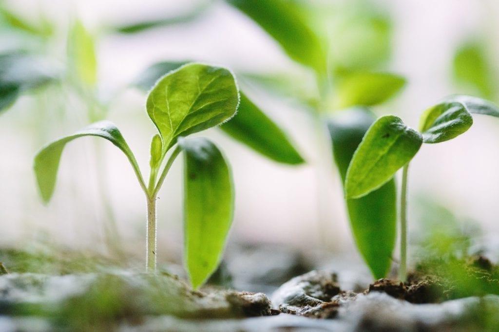 Gingermood - Blog - growth mindset